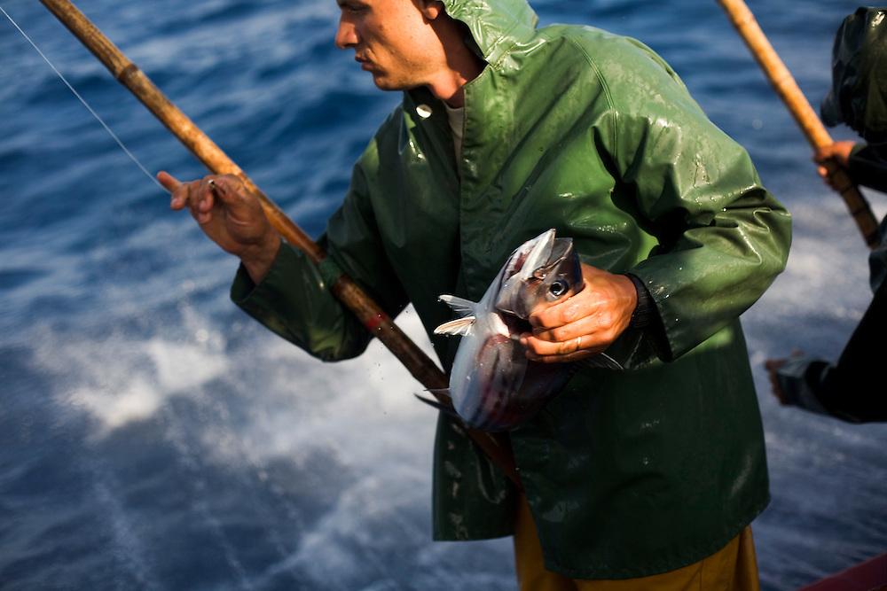 Traditional tuna fishing in the sea of the Azores, in the Atlantic ocean, Portugal.