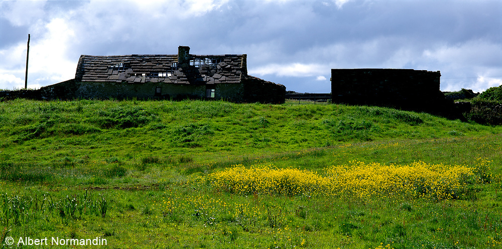 Farm houses with green field and yellow flowers
