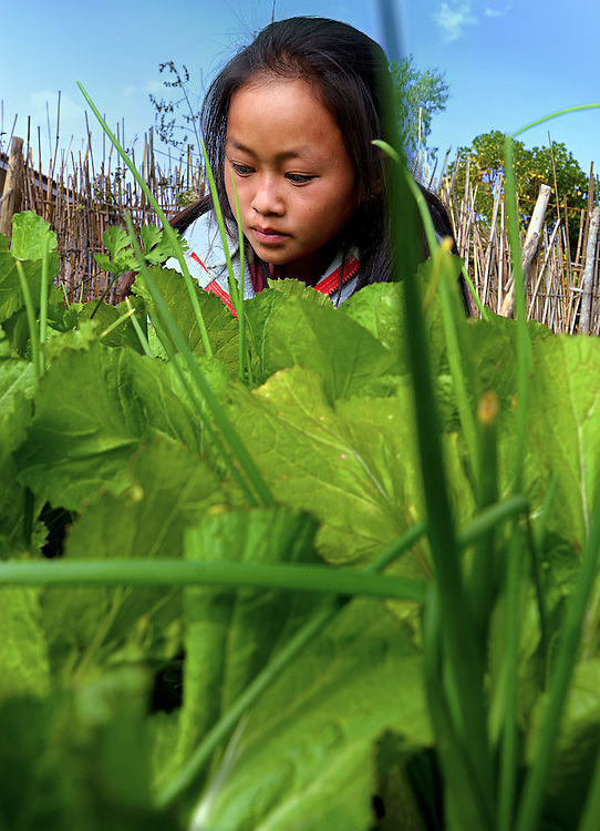 A girl tending salad grown at school in Phonsovan, Laos.