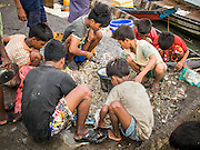 08 NOVEMBER 2014 - SITTWE, RAKHINE, MYANMAR:  Boys scavenge for trash fish on the pier in Sittwe. They will sell the fish or bring it home. Sittwe is a small town in the Myanmar state of Rakhine, on the Bay of Bengal.  PHOTO BY JACK KURTZ
