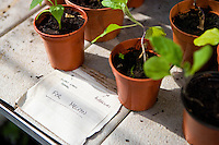 seedlings in small plant pots with note to new owner