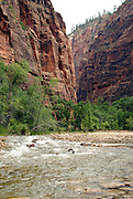 The Riverwalk Trail follows the North Fork Virgin River in Zion National Park Utah.