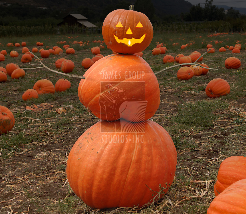 A photograph of a Pumpkin figure in a field.