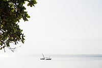 Dhouws moored on a tranquil East African coastline, Mombasa, Kenya