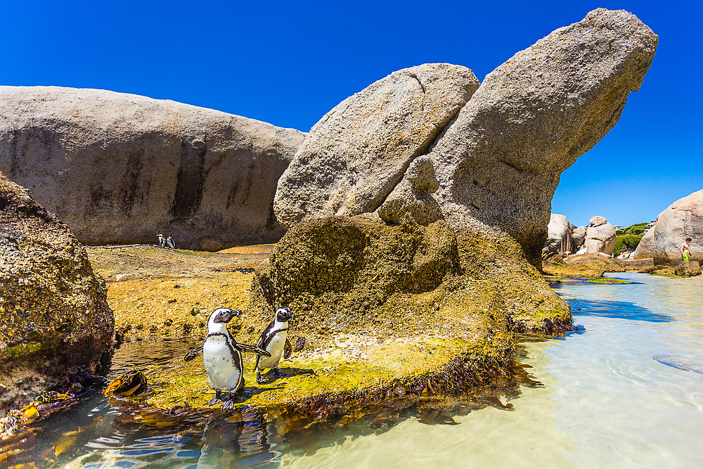 A picture of Boulder's Beach in Cape Town, South Africa.