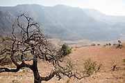 Tree in landscape, Drakensberg Mountains, South Africa.