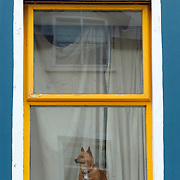 Small dog looking at street in standing position