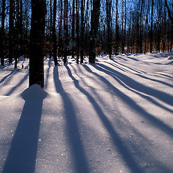 North New Portland, ME. Snow. Shadows. Northern Hardwood Forest.  Northern Forest.  Winter.