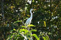 Malaysia rain forest birds and animals along the Kinabatangan River in Sabah, Malaysia, Borneo.