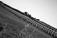 Reportage sul comune di Alessano per il progetto propugliaphoto..Un ex campo di grano oggi occupato da impianti fotovoltaici..Macurano è un villaggio rupestre considerato un luogo di scambio e commercio, simbolo della cultura dell'olio per la presenza ad oggi di alcune tracce nelle grotte e di frantoi funzionanti nella zona. L'insediamento è caratterizzato da una serie di grotte sia naturali che scavate nel calcare, cisterne per la raccolta dell'acqua, sistemi di canalizzazione che scendono da Montesardo, viottoli, scalette e vie più larghe con antiche tracce di carri..Si ritiene che in questo sito, un vero e proprio centro abitato ben organizzato distante circa quattro km dalla costa, i monaci basiliani scappati dall'oriente in seguito alla lotta iconoclasta, trovarono rifugio e si dedicarono all'agricoltura..L'area del villaggio rupestre fu sicuramente sfruttata in epoche successive, lo prova l'esistenza di ben tre masserie di cui una fortificata e i resti di una serie di costruzioni che fanno parte dei numerosi esempi di architettura rurale presenti in questo territorio. .Il complesso masserizio, denominato Macurano, edificato probabilmente nel Cinquecento include la Masseria di Santa Lucia e la cappella di Santo Stefano. La Masseria è dominata dal nucleo originario, ovvero dalla torre cinquecentesca coronata da beccatelli a sostegno del parapetto aggettante del terrazzo sommitale.