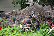 "CHENGDU, CHINA - MAY 28: (CHINA OUT) <br /> <br /> Boston ivies cover wasted cars at a parking lot on May 28, 2016 in Chengdu, Sichuan Province of China. Hundreds of wasted vehicles piled together which seemed to be ""car graves\"".<br /> ©Exclusivepix Media"