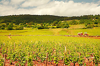the vineyards in Puligny-Montrachet, Cotes de Beaune, Burgundy..Photo by Owen Franken for the NY Times..May 28, 2008.