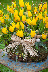 Basket of yellow tulips, pussy willow and ivy with raffia and eggs