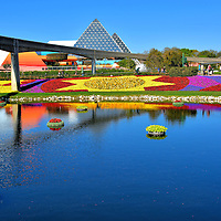 Starbursts Garden in Festival Blooms Section at Epcot in Orlando, Florida <br /> In addition to topiaries, the Flower Garden Festival featured spectacular beds of colorful blooming plants. A stunning example is the golden starbursts in the Festival Blooms section of Future World.  They surrounded the east bank of a small lake leading to Showcase Plaza.  Plus there were over 200 rings of floating flowers accenting the water.  I was fortunate to photograph Disney's garden magic on the opening day of the event in 2016.