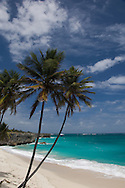 Palm trees and surf at Bottom Bay on the East Coast of Barbados