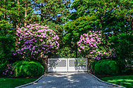Spring, Flowers blooming, Gate, Halsey Neck Lane, Southampton, NY