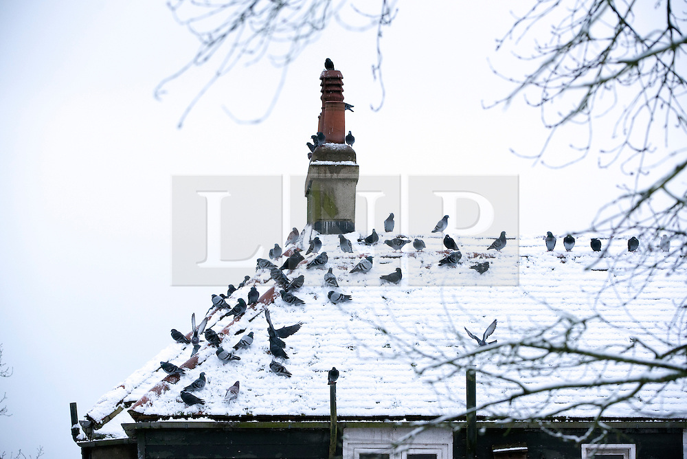 © Licensed to London News Pictures. 03/02/2015. Richmond, UK. Birds sit on a snow covered roof to keep warm.  Deer in snow in Richmond Park, South West London today 3rd February 2015. Snow fell across the London area overnight . Photo credit : Stephen Simpson/LNP