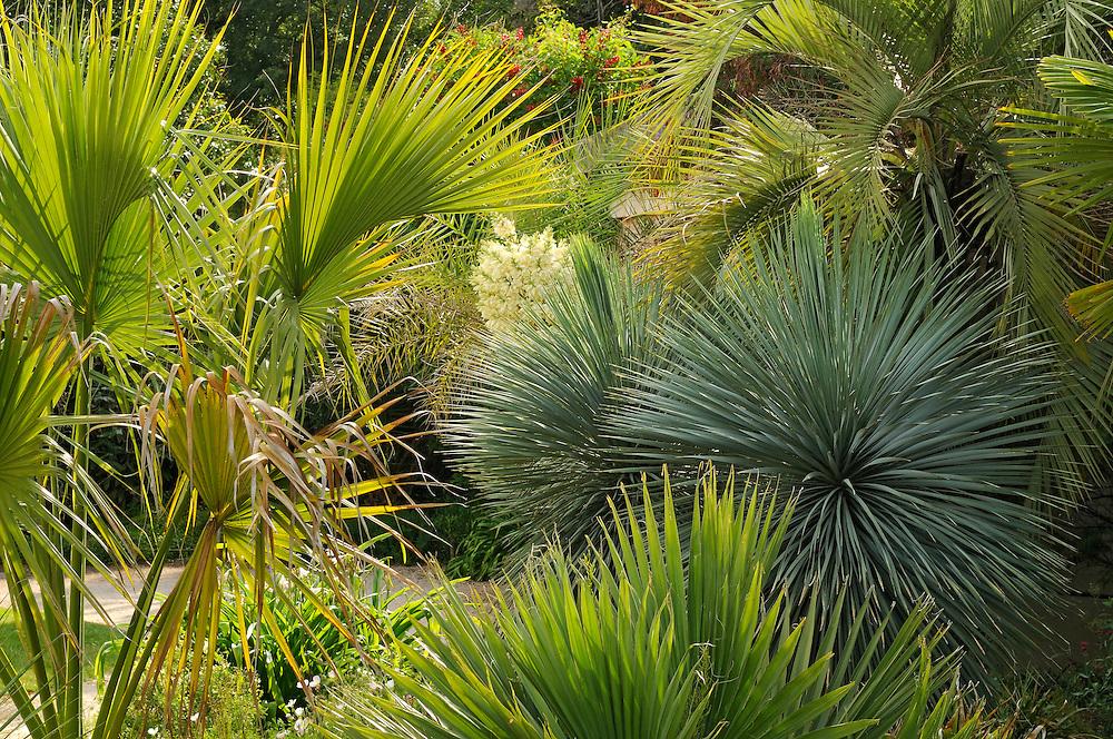 France, Languedoc Roussillon, Hérault, Montpellier, Château de Flaugergues, Folie, jardin, palmiers et yucca rostrata