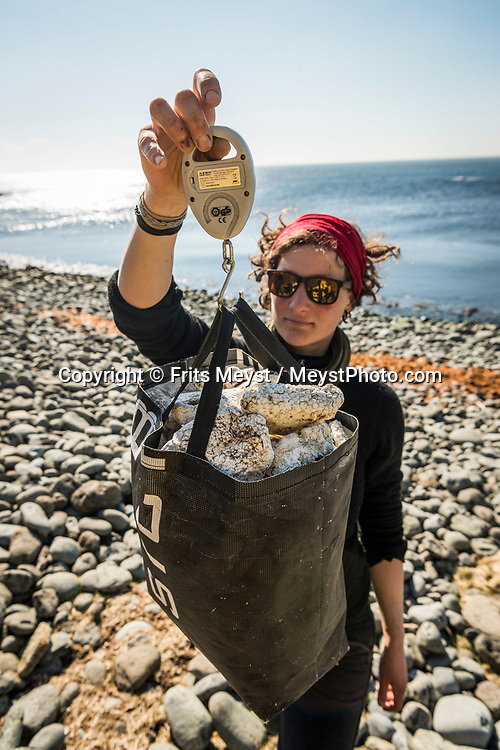 Iceland, April 2019. Lauren Grueterich is an Industrial Engineer for Energy and Environment Management turned sailor, with a passionate hatred for litter on the beach.  Surveying the beach and collecting the plastic fishery waste, we also find a dead puffin. Scientists, storytellers and industrial designers work together during the Ocean Missions Iceland scientific sailing expedition aboard Schooner Opal.  The organisation wants to inspire people to take direct action towards ocean conservation, by combining science and education with exploration and adventure. Photo by Frits Meyst / Meystphoto.com