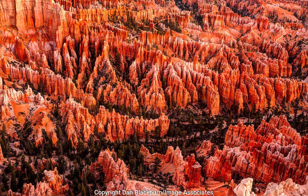 Sunrise Illuminates the Bottom of Bryce Canyon in Bryce Canyon National Park Utah