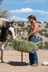 hot shirtless farmer feeding a horse with a bale of hay