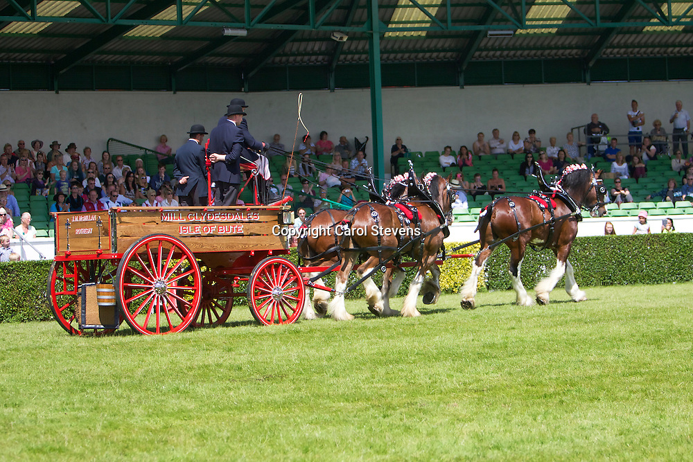 Mr J M McMillan's Mill Clydesdales Team
