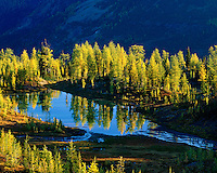 Autumn larches around Chalice Pond, Purcell Mountains British Columbia
