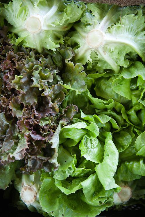 Lettuce, Farmers market