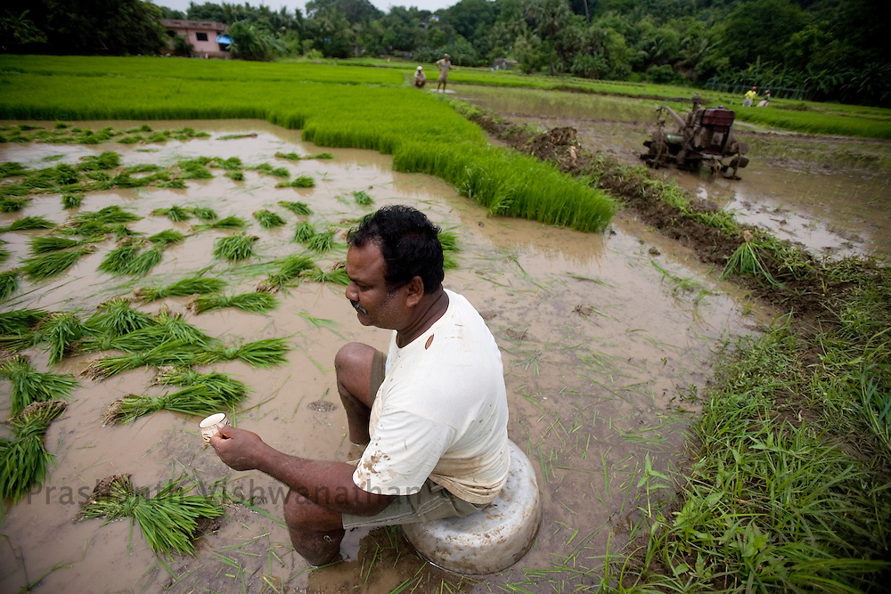A rice farmer looks on during a tea break on a rice field in the outskirts of Mumbai, India, on Saturday, July. 12,2008. Photographer:  Prashanth Vishwanathan/Bloomberg News
