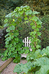 Squash arch framing wooden seat in the vegetable garden