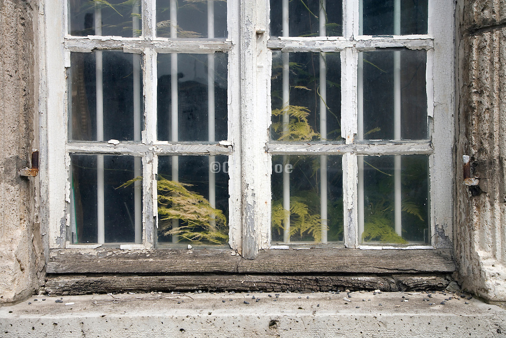 very old wooden window with green plants growing behind it seen from the outside
