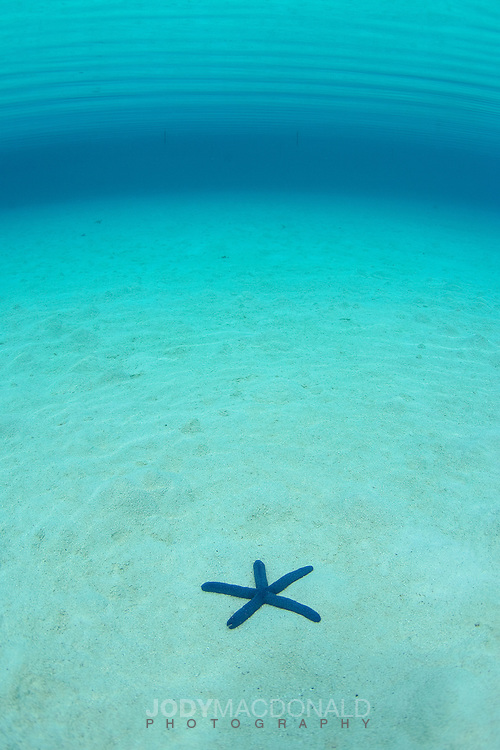 Lone blue starfish in an otherwise empty sea