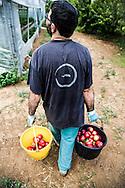Emiliano Albensi<br /> 29/06/2013 Scanzano Jonico (MT)<br /> Nella foto: Pasquale Stigliani, 37 anni, agricoltore.<br /> Sul suo profilo Blogger scrive: &ldquo;Consigliere comunale eletto da 231 elettori di Scanzano Jonico. Oggi semplice cittadino, amo la politica, la mia madre terra. Il mio impegno &egrave; rivolto alla diffusione delle fonti energetiche rinnovabili per costruire lo sviluppo sostenibile&rdquo;. Laureato in Scienze Politiche con un master in energie rinnovabili, Pasquale vive e lavora a Scanzano Jonico, in Basilicata, dove coltiva cinque ettari di terra insieme ai suoi genitori.