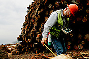 PALCO scaler Todd Calvo measures redwood logs at the sawmill in Scotia, CA on Wednesday, June 28, 2006. The town of Scotia in Northern California is a company town owned by the Pacific Lumber Company (PALCO), but that will change as the company will begin to sell the town. (Photo by Max Whittaker for The New York Times)<br />