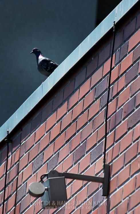 Schweiz, CHE, Basel, 2002: Taubenabwehr per Ultraschall an einer Haeuserwand, eine Taube (Columba liva) sitzt auf dem Dach, Methode zur Loesung des Taubenproblems in den Staedten, soll das Sitzen und den Nestbau von Tauben verhindern. | Switzerland, CHE, Basel, 2002: Ultrasound pigeon defense at a house wall in Basel, Pigeon is sitting on the roof. Method to solve the pigeon problem in the cities. Should prevent pigeons (Columba liva) from sitting and nesting at these buildings. |