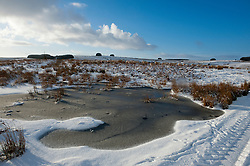 © Licensed to London News Pictures. 17/01/2015. Sheep wait by a frozen pool on the Mynydd Epynt moorland for the farmer to bring food. There was overnight snowfall on high land in Mid Wales. Mynydd Epynt, Powys , Wales, UK. Photo credit: Graham M. Lawrence/LNP