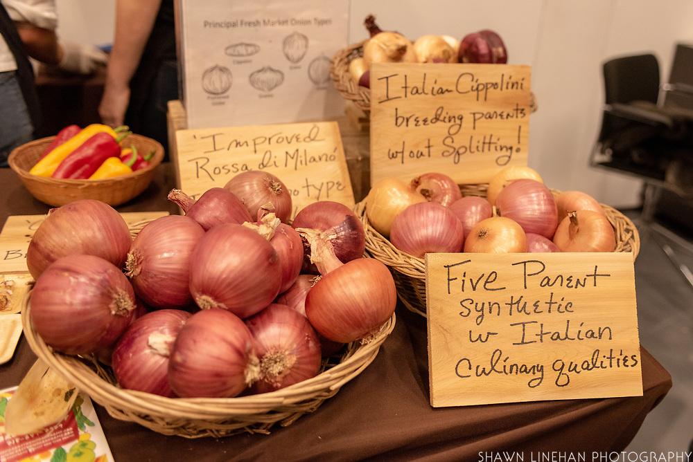 Showcase Experimental breeding <br /> Breeder: John Navazio, Johnny's Selected Seeds<br /> ONION, Allium cepa<br /> Chef: Suzanne Cups, Untitled
