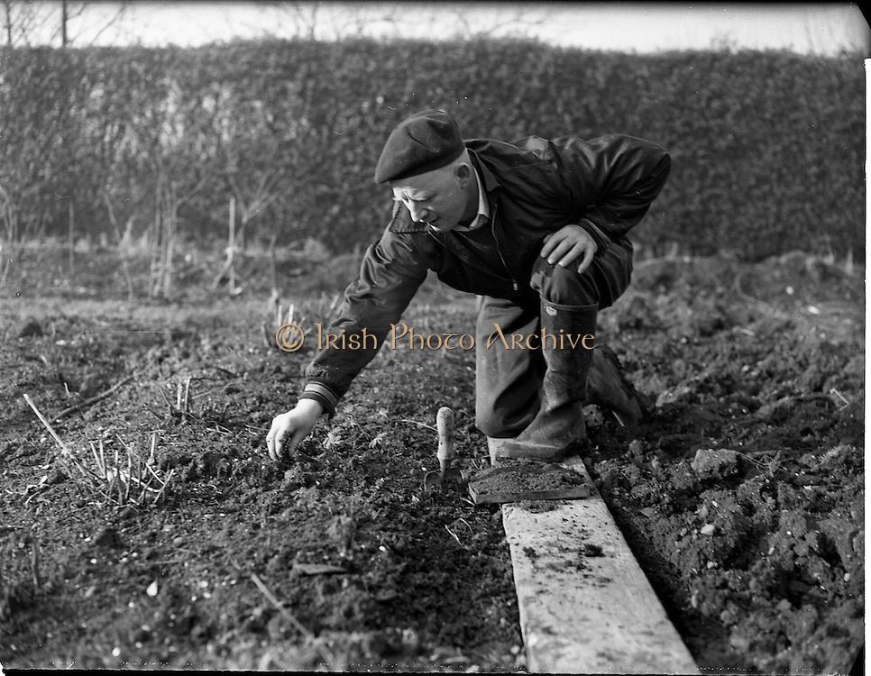 06/02/1960<br /> 02/06/1960<br /> 06 February 1960 <br /> Gardening scenes at Mr Alvey's, 47 Kincora Road, Clontarf, Dublin for Irish Shell.