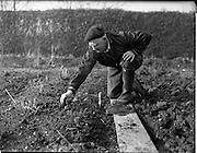 06/02/1960<br /> 02/06/1960<br /> 06 February 1960 <br /> Gardening scenes at Mr Alvey's, 47 Kincora Road, Clontarf, Dublin for Irish Shell.