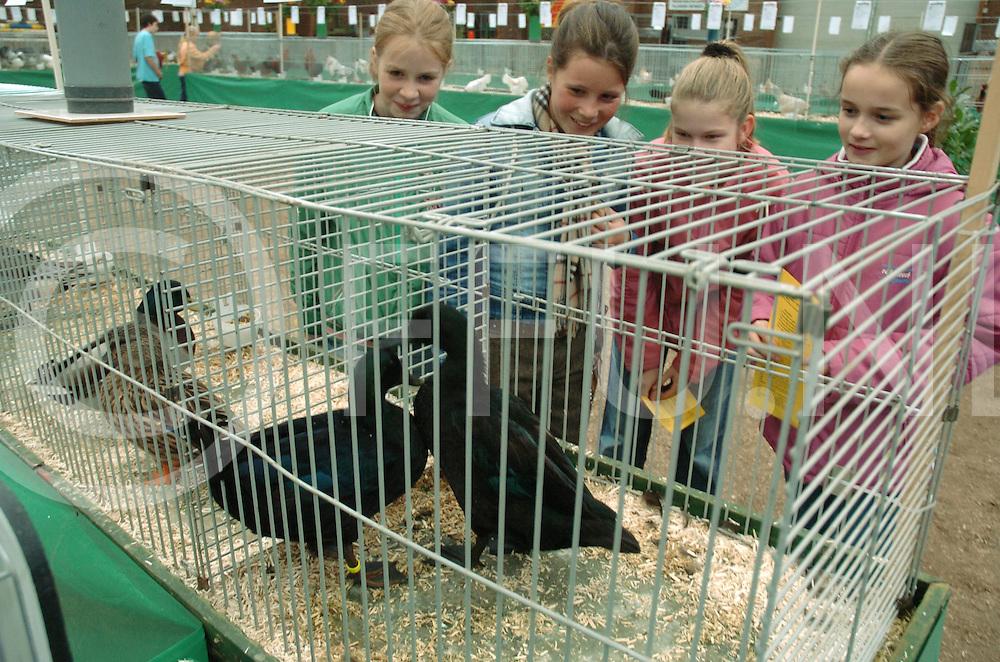 061013 hardenberg ned<br /> Vechtdalshow een kleindierenshow in manege De Guldens Spoor waar kinderen van de basisschool de Vlinder op bezoek waren.<br /> fotografie frank uijlenbroek&copy;2006 michiel van de velde