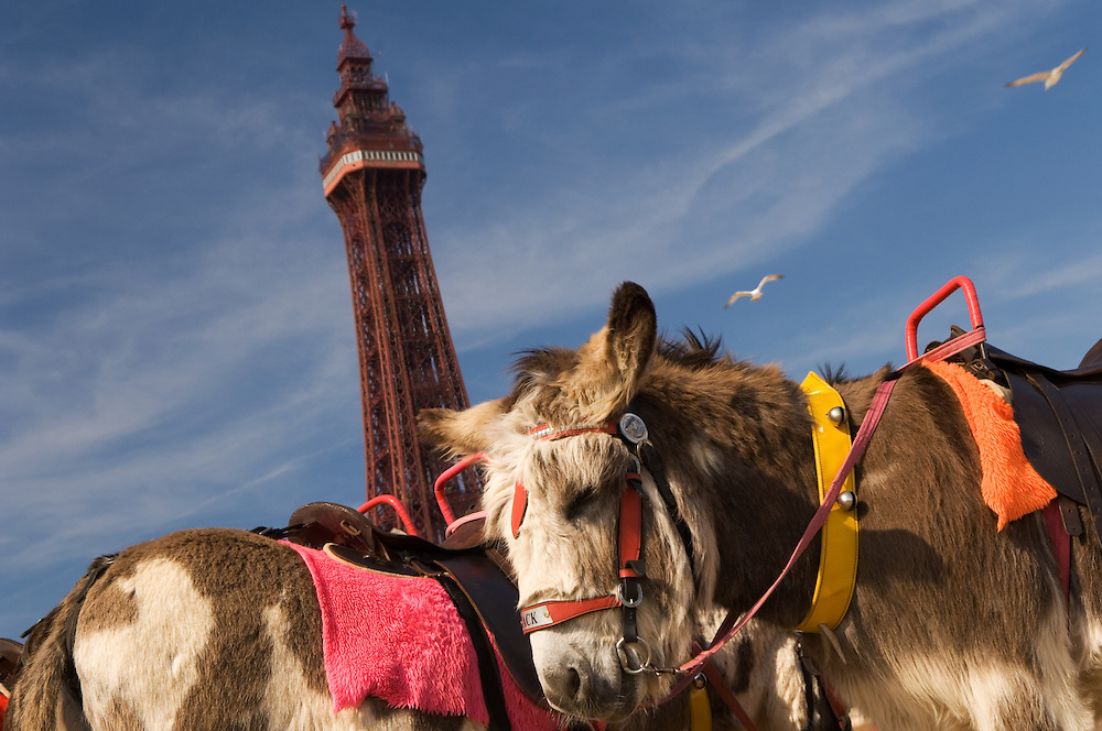 Blackpool Tower, the piers and the Pleasure Beach are the landmarks of Blackpool's Golden Mile. Daytrippers and holidaymakers alike come to walk the promenade and enjoy the amusement arcades and rides, Lancashire, United Kingdom