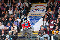 KELOWNA, CANADA - APRIL 18: Rocky Racoon, mascot of the Kelowna Rockets, dances in the stands on April 18, 2014 during Game 1 of the third round of WHL Playoffs at Prospera Place in Kelowna, British Columbia, Canada.   (Photo by Marissa Baecker/Shoot the Breeze)  *** Local Caption *** Rocky Racoon;
