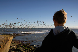 Boy watching seagulls Cullercoats beach; NE England