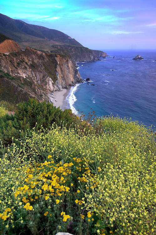 Flowers at Coast, Highway 1, Cabrillo Highway, Big Sur, California, United States of America