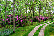 Driveway with Rhodondendron, 2301 Deerfield Rd, Sag Harbor, NY