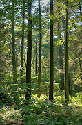 The deciduous forest of eastern Massachusetts in late summer