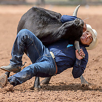 Tyrone Tsosie wrestles a steer to the ground during the Navajo Nation Fair rodeo at the Navajo Nation Fairgrounds in Window Rock Saturday.