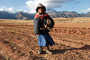 A Peruvian sheep herder guides his sheep across a field high up in the Andean mountain range.
