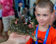 Northland-Ngunguru kids learn about trapping invasive Asian Paddle Crabs