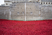 © Licensed to London News Pictures. 15/10/2014. London, UK The Tower of London's Poppy Installation today 15th October 2015.  The artwork, Blood Swept Lands And Seas Of Red, was created to mark the centenary of the start of the Great War. It will eventually include 888,246 ceramic poppies to represent all British or colonial military fatalities of the conflict. Photo credit : Stephen Simpson/LNP